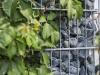 Gabionenstützmauer, Ziersteine / Runde Steine aus Serpentin - Serpentinit für Gabionen (Natursteine aus Polen)