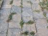 Schiefer, Steine für Gehwegbau vierseitig gesägt (Schiefer aus Polen), Gartenplatten, Gehwegplatten, Naturstein – Schiefer für eine Natursteinmauer, Gartenwege, Fassadensteine, Gartenplatten, Gehwegplatten, rustikale Platten und Mauersteine, Rinde, Schüttgut, Gartensteine, Gabionensteine, SchroppenNaturstein aus Polen, Schieferplatten