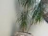 Tröge, Schüssel usw. aus polnischen Feldsteinen, rustikale oder moderne und bunte Tröge aus Natursteinen, Tröge für den Garten, unterschiedliche Größen, Farben und Formen, Feldsteine aus Polen, Natursteine aus Polen, Das ist nur ein Beispiel. Naturprodukt, Unikat; Es kann sein, dass dieses Sortiment verkauft worden ist.