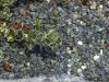 GRÜNE NATURSTEINE- Splitt aus Serpentin - Serpentinit, Naturstein aus Polen, Platten, Gartenmöbel aus Natursteinen, Natursteinmauer, Gabionensteine, Gabionenzaun, Gabionenmauer, Serpentin-Splitt, Serpentin-Ziersteine
